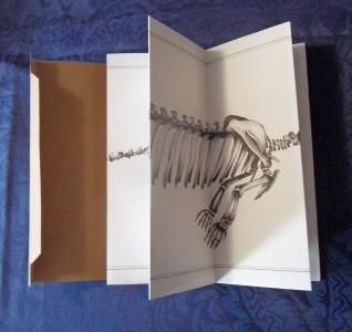 Dessin à l'encre sur papier plié - 20x60cm - 2016