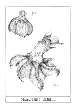 Poulpe Dumbo - encre sur papier, A3, 2015