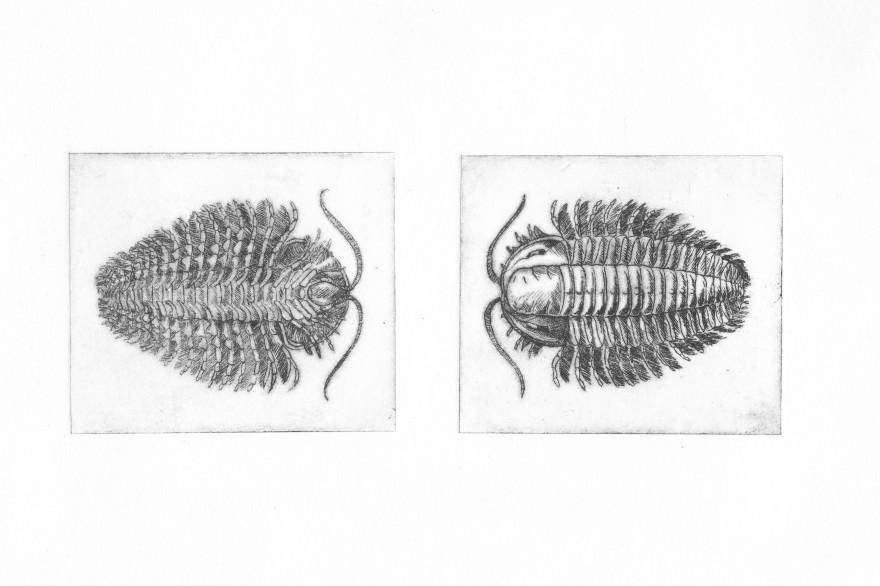 Trilobite#2 - pointe sèche sur renalon, A5, 2015