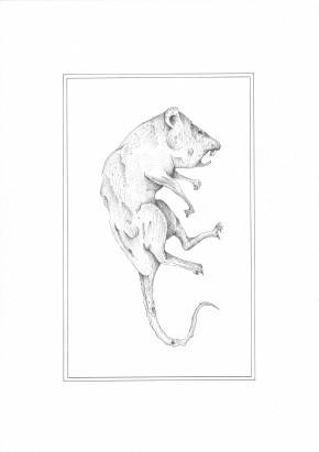 Momie de rat - encre sur papier, A4, 2015