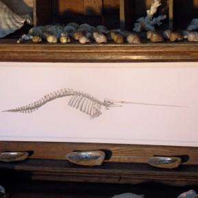 Narval [In situ] - encre sur papier, 65x20cm , 2015