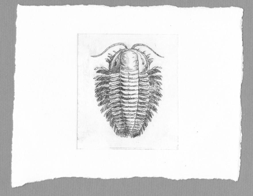 Trilobite - recto - pointe sèche sur renalon A5, 2015