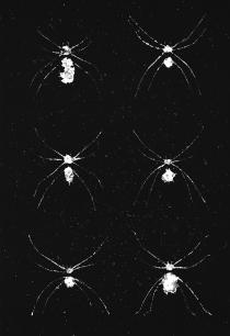 Planche araignée - cliché verre 2, 10x15cm, 2015