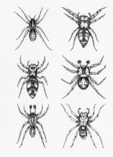 Planche araignée - encre sur papier, 13x18cm, 2015