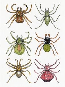 Planche araignée - encre sur papier et aquarelle, 13x18cm, 2015