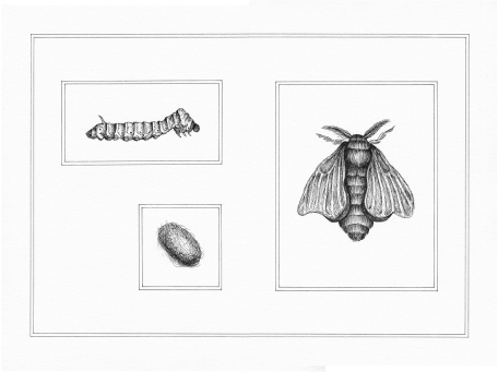 Planche ver à soie - encre sur papier, 24x32cm, 2015