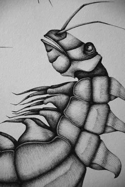 Chimère#2 (détail), encre sur papier, 50x65cm, mars 2016