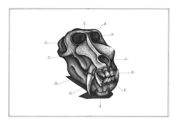 Relique de babouin, encre sur papier Canson 224g, A3, mars 2016