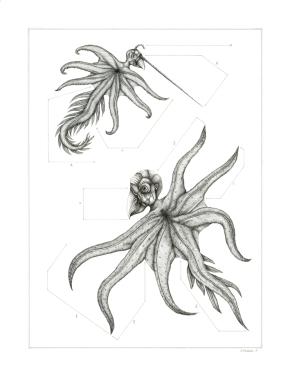 Espèce n°1, encre sur papier, 50 x 65 cm, mars 2016