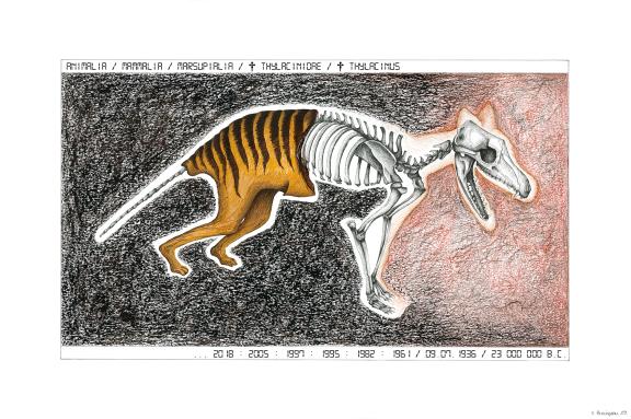 Thylacine, encre, pierre noire, sanguine, et gouache sur papier, 40 x 60 cm, printemps 2017 à automne 2019